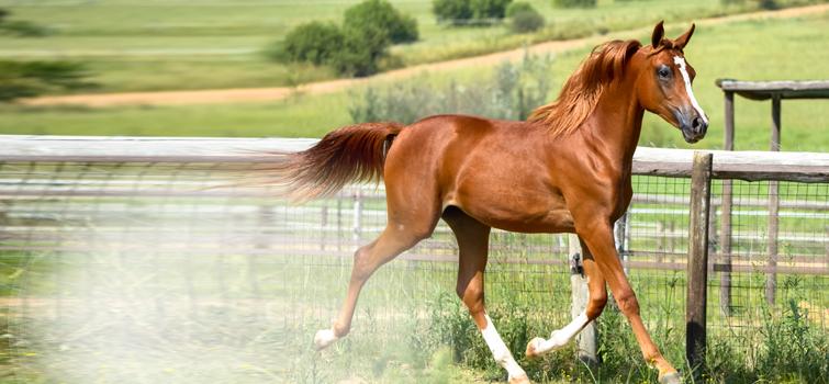 horse_slider1