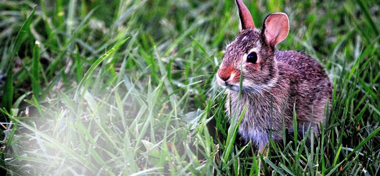 slider_bunny